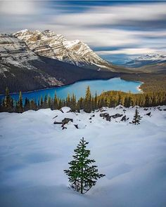 A beautiful shot of Peyto Lake in Banff National Park by @kahliaprilphoto during the #NovemberFrost workshop I was recently teaching with @paulzizkaphoto and @davebrosha  Curated by @johnemarriott  #canadiancreatives #mybanff