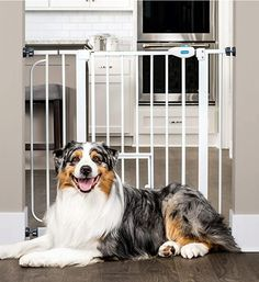 Carlson Extra Wide Walk Through Pet Gate with Small Pet Door, Includes Extension Kit, Pressure Mount Kit and Wall Mount Kit: Pet Supplies Extra Wide Pet Gate, Best Dog Door, Papillion Dog, Great Walks, Pet Door, Small Doors, Gate Design, Little Pets, Large Dogs