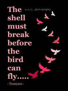 A casca tem de partir antes de que um pássaro poder voar!