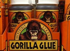 Cats & all pets too - Dogs and Gorilla Glue® – Never a good mix! Maybe you've already heard of the dangers that Gorilla Glue® poses to dogs? Maybe you've even heard stories or seen some of the cool X-ray images of dogs that ingested this stuff?