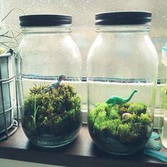 箱庭/植物…などのインテリア実例 - 2014-06-09 05:38:24