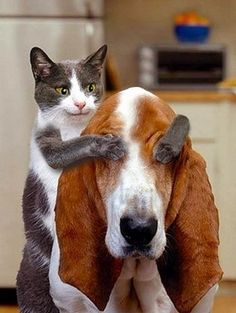 Cat and Dog Friendship.Click the picture to see more pictures