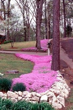 Creeping Phlox.  I want to do this iny backyard this year!