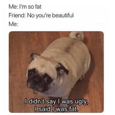 Scroll through these hilarious funny dog memes when you need a pick-me-up. Today we've rounded up the best funny dog memes. Funny Animal Jokes, Funny Dog Memes, 9gag Funny, Funny Relatable Memes, Haha Funny, Funny Animal Pictures, Funny Dogs, Funny Animals, Funny Quotes