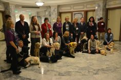 A group shot from The International Courthouse Dogs Conference held on November 08, 2013 in Seattle, WA