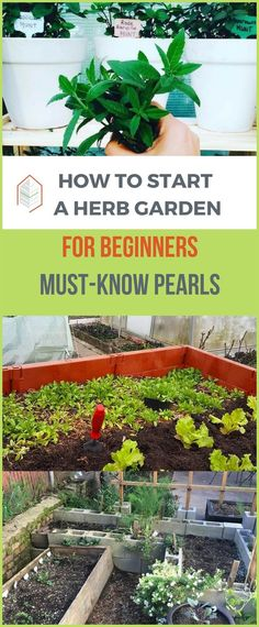 How to Start an Herb Garden for Beginners: Must-Know Pearls. How to start an herb garden for beginners? It's easy. Herbs grow with light sunshine, well-draining, some watering, and some fertilizer or compost. #urbangardening #urbanfarming #gardening #diy #garden #ugrpost