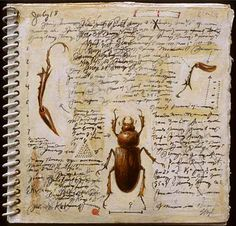 "suzanne stryk ""Field Book (stag beetle)""    2000    5""   x 5""      mixed media on handmade notebook"