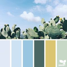 today's inspiration image for { mental vacation } is by @arasacud ... thank you, Sara, for another amazing #SeedsColor image share!