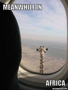 MEANWHILE IN AFRICA | xRIXSTERWEB