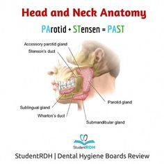 Good Dental Hygiene – How To Take Care of Your Teeth and Gums Daily Dental Hygiene Student, Dental Hygienist, Dental Bridge Cost, Tooth Extraction Aftercare, Dental Quotes, Dental Implant Surgery, Teeth Surgery, Dental Life, Teeth Health