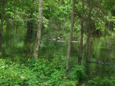 Sam Rayburn Lake flooding Big Sam, Water Sources, Plants, Fuentes De Agua, Plant, Planets