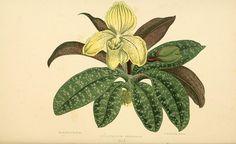 Les plantes a feuillage coloré :. Paris :Rothschild,1867-1870.. biodiversitylibrary.org/page/16481863