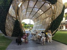 Finding the Right Purebred Dog Had an awesome meet at the Sunshine plaza today! Dog Training Classes, Baby Gates, Purebred Dogs, Ready To Go, Cattle, Scarlet, Kendall, Dogs And Puppies, Sunshine