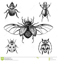 Black and white insects for design, icons, logo or print. Great illustration for Halloween. and white halloween tattoos Hand drawn beetles set. Black and white insects for design,. Kritzelei Tattoo, Doodle Tattoo, Tattoo Drawings, Body Art Tattoos, Art Drawings, Fake Tattoos, Halloween Tattoo, Halloween Halloween, Insect Tattoo