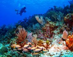 Marvelous corals expect you in Cayman Brac