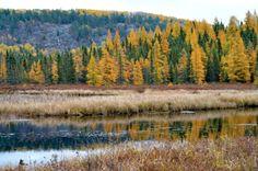 Golden Encore at Algonquin Provincial Park_ Lev Frid Nostalgia, The Good Place, Travel Destinations, Things To Do, Places To Visit, Colours, Mountains, Park, World