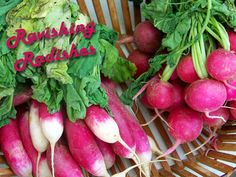 Three radishes for this year's heirloom garden.  I love the promise of spring!