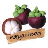Mangosteen, in het Nederlands mangistan, is een tropische boom oorspronkelijk uit de Sunda Eilanden van de Molukken. De boom is ook bekend als purple mangosteen. Ook de vruchten aan de boom heten mangosteen/mangistan.Mangosteen staat bekend om het feit dat het een zeer hoge ORAC (Oxygen Radical Absorption Capacity) waarde heeft. Het is dus een bijzonder goede anti-oxidant.geneest het de huid door celgroei positief te stimuleren, gaat ontstekingen aan de urineweg steken