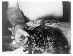 The Autopsy of John F Kennedy in Pictures