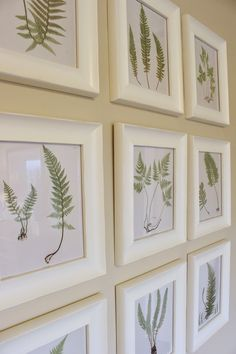 It's A Grandville Life : Gallery Wall: Free Fern Printables Free Printable Art, Free Printables, Diy Wall Art, Diy Art, Gallery Wall Layout, Arte Floral, Botanical Prints, Botanical Gallery Wall, Botanical Posters