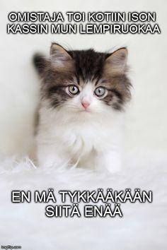 Monet, Animals And Pets, Cats, Pets, Gatos, Cat, Kitty, Kitty Cats