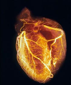 Anatomical heart, while running... like golden glow, adds to discordian effect I want in my tattoo