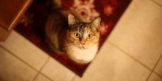 Kediler Nasıl Öğrenir   Kedi Sahipleri