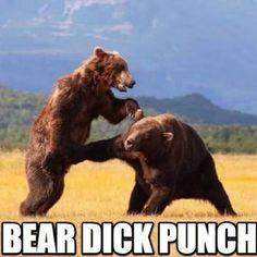 Kung-fu Brown Bear!