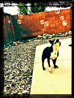 Her love of bubbles makes me happy