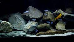 Aquarium achterwand geeft het aquarium een gevoel van diepte en is daarmee nuttige aquarium decoratie