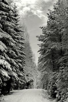 ✯ Norwegian Woods