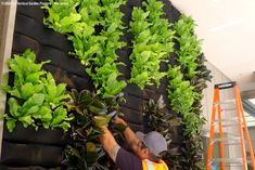 Tuck plants into Florafelt Vertical Garden system.  Hose it down and the PET felt wall allows water to percolate into the plants.