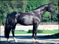 ►Totilas. El precio de este caballo llegó a los 28 millones de dólares.