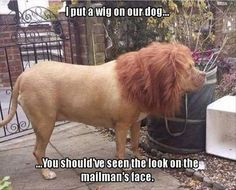 I put a wig on our dog...you should've seen the look on the mailman's face!