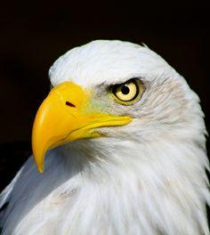 Eagle eyed