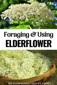 Elderflower not only tastes fantastic, it also has some excellent medicinal properties. Here's everything you need to know about foraging, using, and preserving elderflowers for cocktails, teas, tinctures, desserts, and loads more #elderflower #naturalremedies #foraging What Is Elderflower, Home Remedies, Natural Remedies, Elderberry Flower, Green Living Tips, Natural Lifestyle, Natural Cleaners, Eating Organic, Natural Living