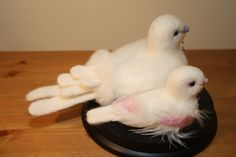 It's a girl - Mother and baby girl dove
