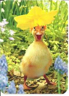 Duckling in Daffodil Bonnet Easter Card Baby Animals Super Cute, Cute Little Animals, Cute Funny Animals, Happy Animals, Pet Ducks, Baby Ducks, Fluffy Cows, Fluffy Animals, Baby Animals Pictures