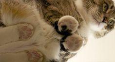 猫を下から見た画像wwwwwwwwwwwwwwwww