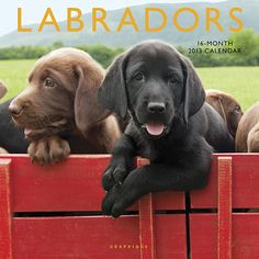 Labradors Wall Calendar: Energetic and affable, Labs are the most popular breed of dog in both the United States and the United Kingdom. Loyal, intelligent and good-natured: these are the words that spring to mind when we see Labrador Retrievers at work and at play.  $13.99  http://calendars.com/Labrador-Retrievers/Labradors-2013-Wall-Calendar/prod201300002686/?categoryId=cat10086=cat10086#