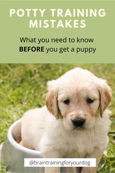 Potty Training For Your Puppy/Dog. Potty Training Mistakes. #dogtraining #puppytraining #pottytraining Puppy Training Tips, Crate Training, Training Your Puppy, Potty Training Puppies, Training Pads, Training Collar, Training Quotes, Toilet Training, Puppies Tips
