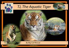 """TJ, The Aquatic Tiger"" Hardback Photo Book, Full color, 40 page, 11""x8.5"" Reserve YOUR COPY now at https://big-cat-rescue.myshopify.com/products/book-tj-the-aquatic-tiger-memorial-pre-order"
