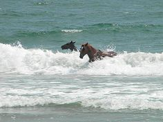 Horses at beautiful Emerald Isle, NC