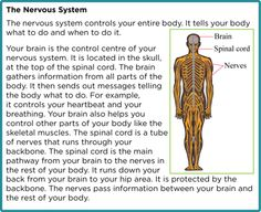 Tears: Why Crocodiles are so Sensitive. Next time you're teaching a lesson on the and reflex arcs, grab this , enter it into your SOLARO teacher account Playlist, and use SOLARO as a launching point for a class discussion. Crocodile Tears, Crocodile Skin, Spinal Cord Nervous System, Scientific American, Crocodiles, Your Brain, Told You So, Teacher, Crocodile