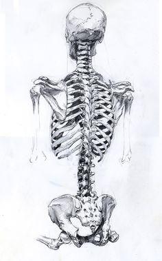 Skeleton Illustration | Tumblr