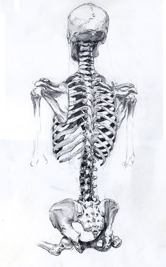 Skeleton Illustration | Tumblr