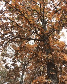 Autumn Cozy, Fall Winter, Autumn Aesthetic, Best Seasons, Fall Pictures, Thing 1, Fall Pumpkins, Fall Season, How Beautiful