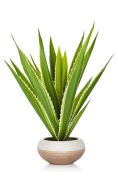 Aloe Vera In Stone Effect Pot