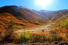 Running across autumn in Hunter Pass outside of Anchorage,...