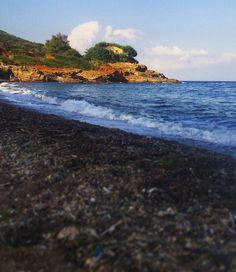 Spiaggia barbossa isola d'elba #mare #bello #sea #coast #mountain #island #isola #elba #paradiso #sogno #dreams #dream #light #water #blue #cloud #rocce #fichi #india # three #catctus #acqua #azzurro  #lightblue #